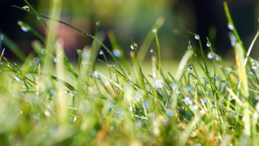green watered lawn