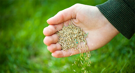 hand holding seeds, green grass in the background